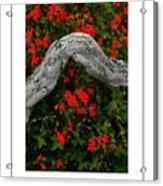 Ivy Geraniums And Log Poster Acrylic Print