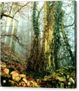 Ivy In The Woods Acrylic Print