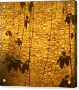 Ivy Shadows Acrylic Print