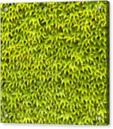 Ivy Wall Acrylic Print by Andy Smy