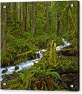 Lifeblood Of The Rainforest Acrylic Print