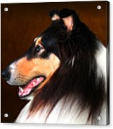 Black Jack- Collie Acrylic Print