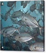 Jack Fishes At The U.s.a.t. Liberty Wreck Acrylic Print