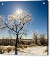 Jack Frost's Last Stand Acrylic Print