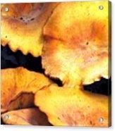 Jack O Lantern Mushrooms Acrylic Print