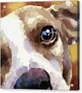 Jack Russel Terrier Acrylic Print