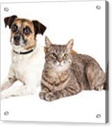 Jack Russell Terrier Dog And Tabby Cat Acrylic Print