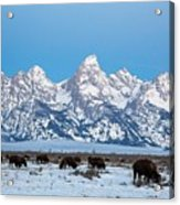 Jackson Hole The Grand Tetons Acrylic Print