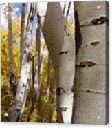 Jackson Hole Wyoming Acrylic Print