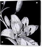 Jacqui's Lily Acrylic Print