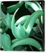 Jade Vine Acrylic Print