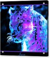 Jaguar  Acrylic Print by Nick Gustafson