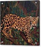 Jaguar's Domain Acrylic Print