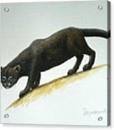 Jaguarundi Acrylic Print