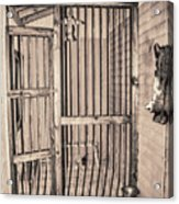 Jail House Interior Acrylic Print