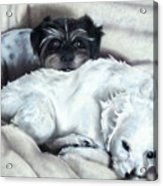 Jake And Bobo C Acrylic Print