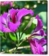 Jamaican Bloom Photograph   Acrylic Print