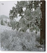 January On Kamiak Butte Acrylic Print