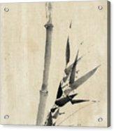 Japan: Bamboo, C1830-1850 Acrylic Print