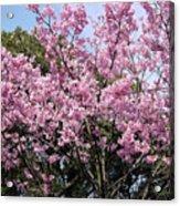 Japan Blossoms Acrylic Print