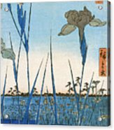 Japan: Iris Garden, 1857 Acrylic Print