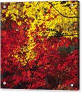 Japan Vibrant Leaves Acrylic Print