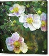Japanese Anemone 4781 Idp_2 Acrylic Print
