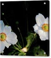 Japanese Anemone Flower Acrylic Print