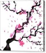Japanese Cherry Blossoms Acrylic Print