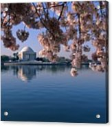 Japanese Cherry Blossoms Prunus Acrylic Print by Medford Taylor