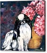 Japanese Chin And Hydrangeas Acrylic Print