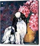 Japanese Chin And Hydrangeas Acrylic Print