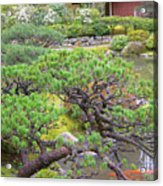 Japanese Elm Acrylic Print