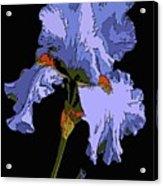 Japanese Iris-blue Beauty Acrylic Print