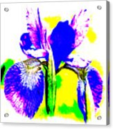 Japanese Iris Pop Art Abstract Acrylic Print