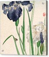 Japanese Irises Acrylic Print