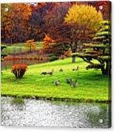 Japanese Island Fall Colors Acrylic Print