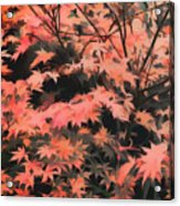 Japanese Maple - Nature Art Acrylic Print