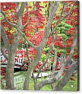 Japanese Maple Tree And Pond Acrylic Print
