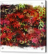 Japanese Maple Under The Willow Acrylic Print