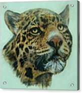 Jaquar  Acrylic Print