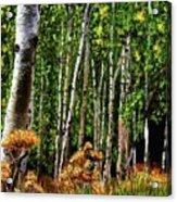 Jebediah Smith Wilderness Walk 2016 Acrylic Print