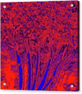 Jelks Fingerling 17 Acrylic Print