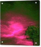 Jelks Pine 3 Acrylic Print