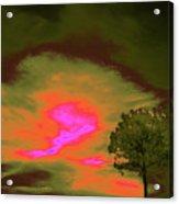 Jelks Pine 4 Acrylic Print