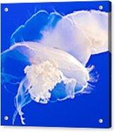 Jellies In Jellyfish Tank In Monterey Aquarium-california Acrylic Print