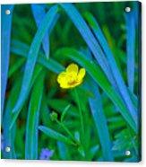 Jellow Flower Acrylic Print