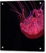 Jelly Acrylic Print