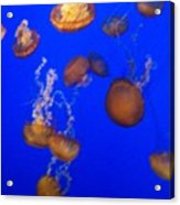 Jelly Fish 2 Acrylic Print