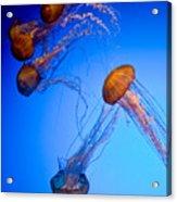 Jelly Fish Iv Acrylic Print